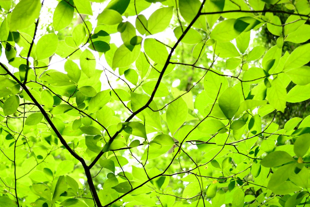 Kilgore Falls_Leaves